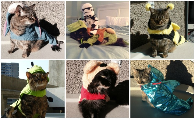 Cats in Costumes Collage