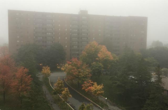Foggy 1