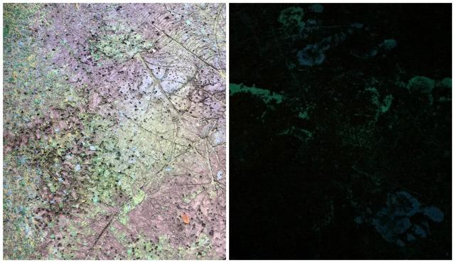 walkways of pandora collage 1